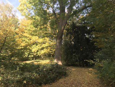 Herbstlaub im Wolfskuhlenpark in Bremen-Kattenturm (2018)