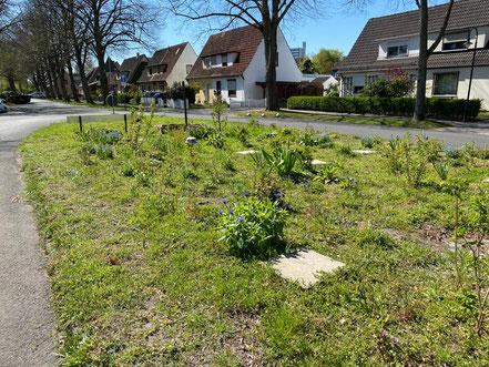 Nach und nach fangen die Blumen an zu blühen. Jutta Dreyers Rettungsinsel für Tiere in Kattenturm, Bremen Obervieland (Foto: 04-2020, Jens Schmidt)