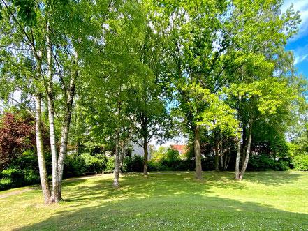 In der schönen Grünanlage Wecholderstraße in Bremen-Kattenesch stehen zahlreiche ältere Birken (Foto: 05-2020, Jens Schmidt)