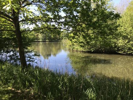 Dellfeldsfleet am Krimpelsee in Bremen-Habenhausen
