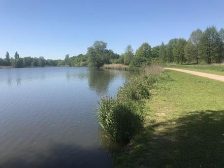 Uferbereich am Krimpelsee in Bremen-Habenhausen