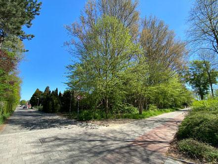 Hochbunker Krumme Schinkel: Durch den Grünwuchs ist der Bunker vom Arsterdamm mit Blick in die Straße Krumme Schinkel kaum zu erkennen (Foto: 04-2020, Jens Schmidt)