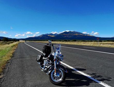 Motoglobe Motorradreisen. Die Harley steht am Strassenrand der State Route Nr. 89 und im Hintergrund sind die Hügel des Kaibab National Forest zu sehen.