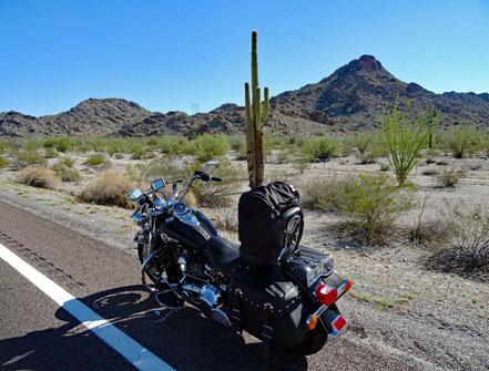 Motoglobe Motorradreisen. Die Harley steht am Strassenrand neben einer grossen Kaktee.