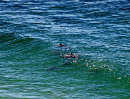 Motoglobe Motorradreisen. Im Meer tummeln sich diverse Delphine.