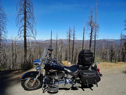 Motoglobe Motorradreisen. Die Harley steht vor verkohlten Bäumen, welche durch einen Waldbrand vernichtet wurden.