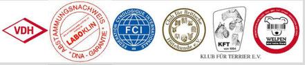 Mitglied: VDH - FCI - Club für Britische Hütehunde Saar e.V - Klub für Terrier E.V