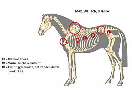 © Analyse: nuria-guedel.ch - Bildquelle Pferd: www.vet-pferdepraxis-klingeberg.de