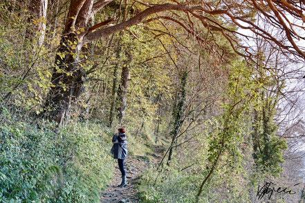 Rajka u šumi kraj rijeke Rajna