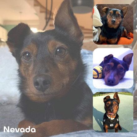 NEVADA adopté en Mars 2018