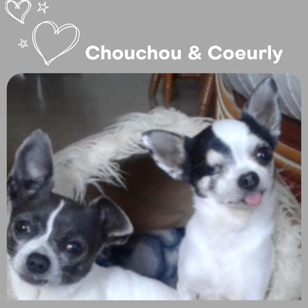 CHOUCHOU & COEURLY adoptés en Juillet 2018