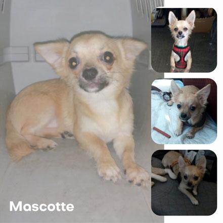 MASCOTTE adopté en Septembre 2017
