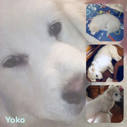 YOKO adoptée en Mai 2018