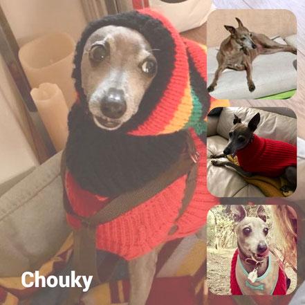 CHOUKY adopté en Octobre 2018