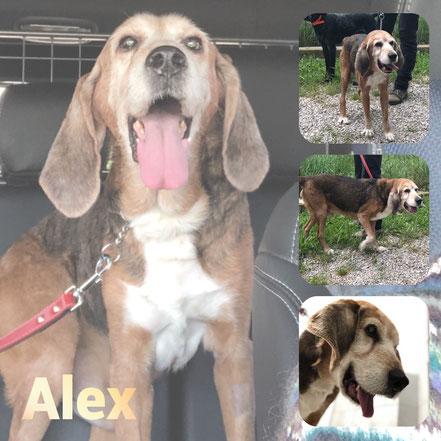 Alex adopté en Décembre 2018