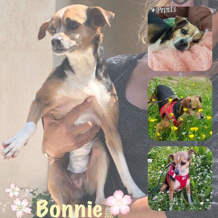 BONNIE adoptée en Juillet 2018