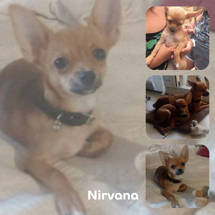 NIRVANA adopté en Septembre 2017