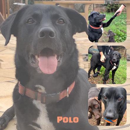 Polo adopté en Mai 2020