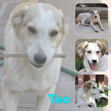 Teo adopté en Juin 2020