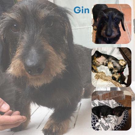 GIN adopté en Avril 2019