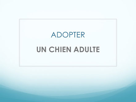 Adopter un CHIOT