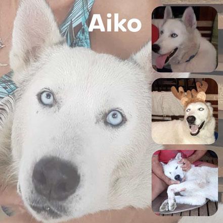 Aiko adopté en FEVRIER 2020