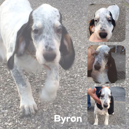 BYRON adopté en Mars 2017