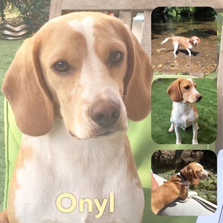 ONYL adopté en Octobre 2019
