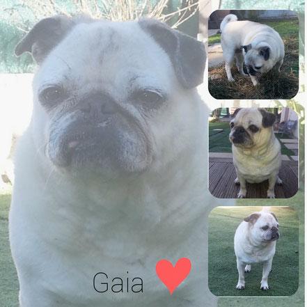 GAIA adoptée en Avril 2019