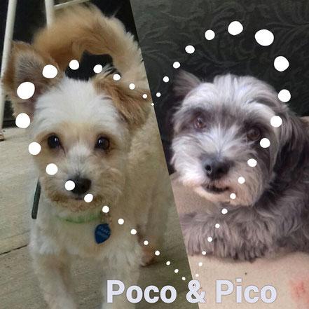 Pico & Poco adoptés en Août 2020