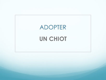 Adopter un chien ADULTE
