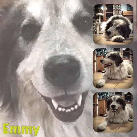 Emmy adoptée en Mai 2020