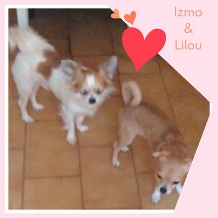 IZMO & LILOU adoptés en Septembre 2017