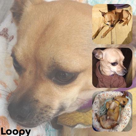 LOOPY adopté en Septembre 2017