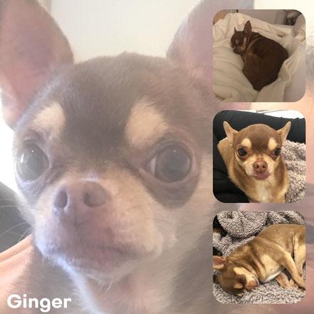 GINGER adopté en Mai 2018