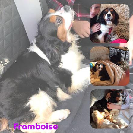 FRAMBOISE adoptée en Mai 2017