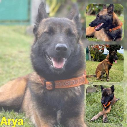 Arya adoptée en Juillet 2020