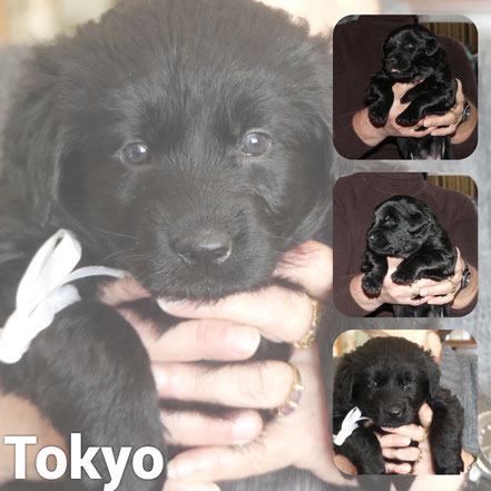 Adoptée en Novembre 2020