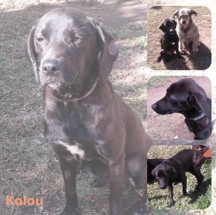 KALOU adopté en Septembre 2019