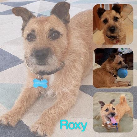 ROXY adoptée en Novembre 2019
