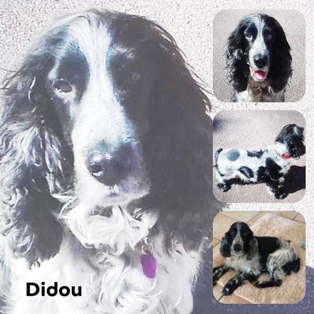 DIDOU adopté en Juillet 2017 - RIP
