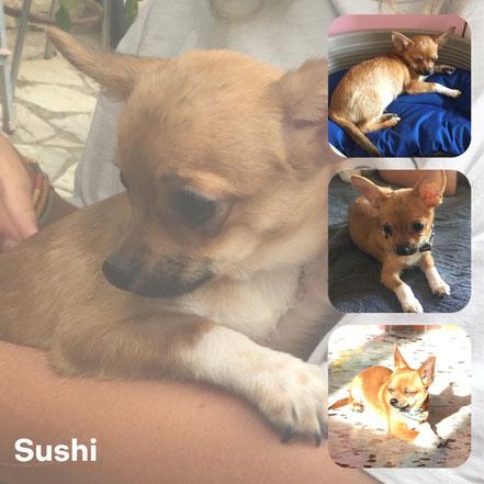 SUSHI adopté en Septembre 2017