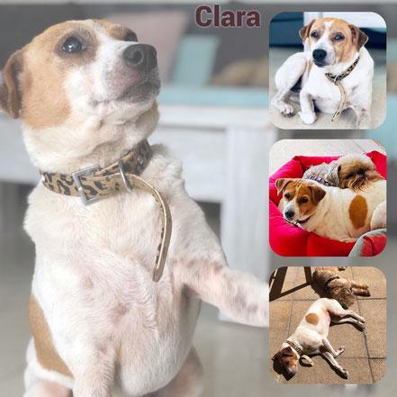 CLARA adoptée en Décembre 2018