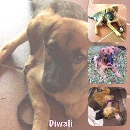 DIWALI adoptée en Avril 2019