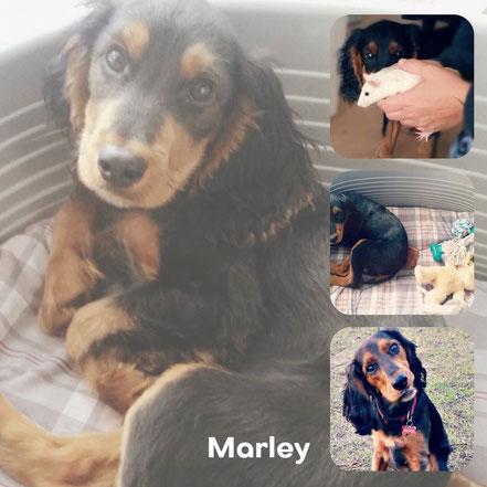 MARLEY adopté en Mai 2017