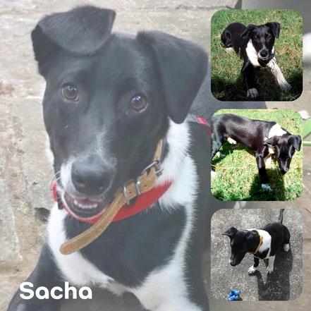 SACHA adopté en Septembre 2019