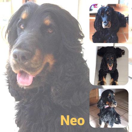 Neo adopté en Août 2020