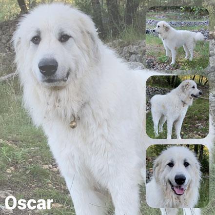 Oscar adopté en Aout 2020