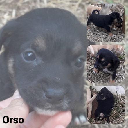 Orso adopté en Octobre 2020
