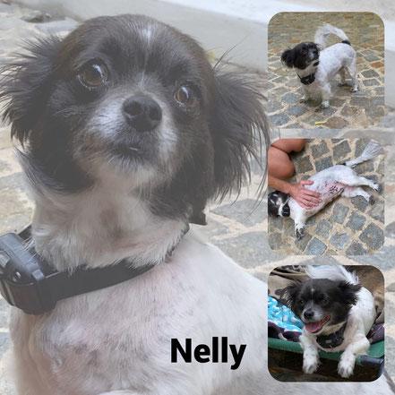 Nelly adoptée en Aout 2020